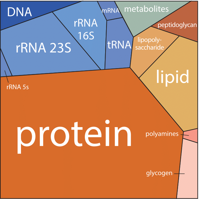 Biology Infographs最强复习资料