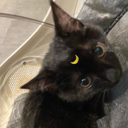 Luna 三个半月 小黑猫 公
