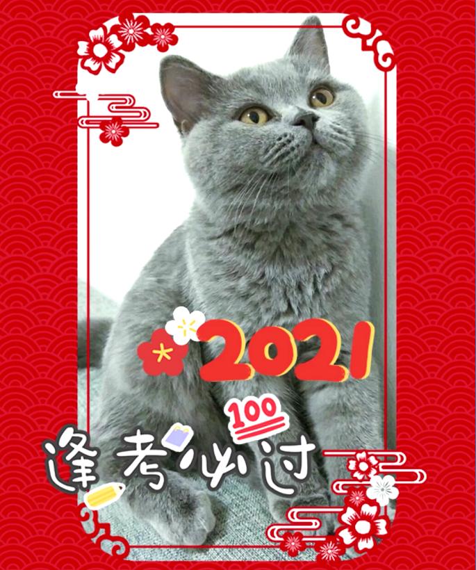 辞旧迎新,春节不打烊!翰林吉祥物来给你送祝福了!
