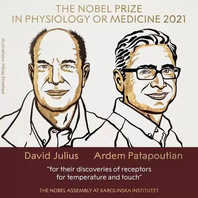 2021首个诺贝尔奖公布!全球疫情时代下,生物医学的价值在哪里?